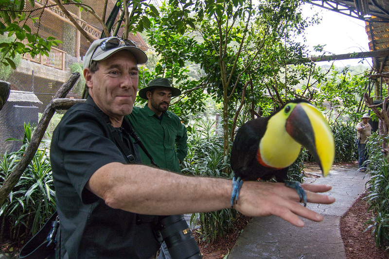 Friendly Toucan at a bird reserve..