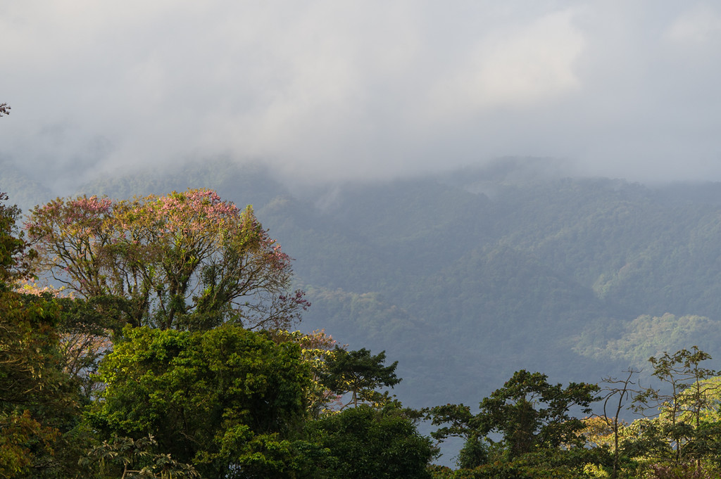 View from near Arenal lake in the morning...