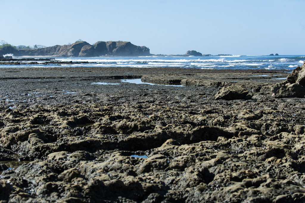 Low tide...tons of tide pools to check out, and tons of animals in the pools.