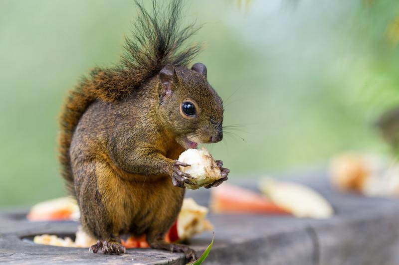 Lisa loves squirrels..