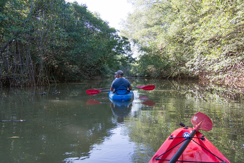 We did a kayak tour up the local river which empties into the ocean. Huge mangroves.