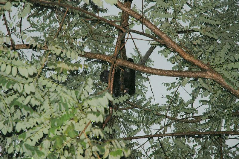 Monkey in the tree!