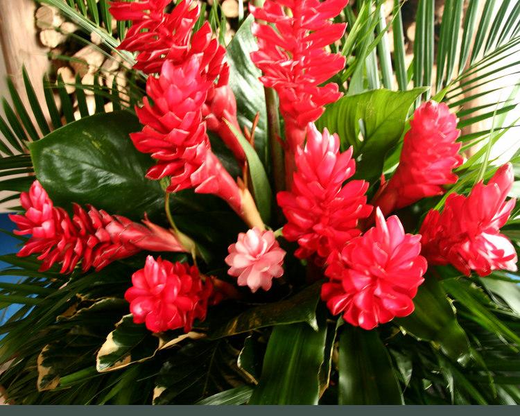 Beautiful flowers of Costa Rica