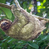 Sloth on the move