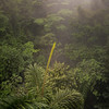 Rain forest near La Fortuna