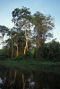 © Joseph Dougherty. All rights reserved.  Sunrise over the rainforest rivers of Tortuguero National Park in NE Costa Rica.