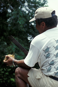 © Joseph Dougherty. All rights reserved.  Native guide and boat captain Modesto Watson uses his machete to crack open a coconut.