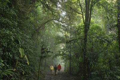 © Joseph Dougherty. All rights reserved.   Hikers walk up the main path into the Monteverde Cloud Forest Preserve.