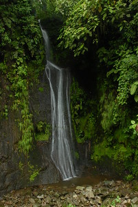 © Joseph Dougherty. All rights reserved.   Waterfall in Braulio Carillo National Park.