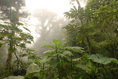 © Joseph Dougherty. All rights reserved.   Misty fog enshrouds the forest at Monteverde, where moisture is omnipresent.
