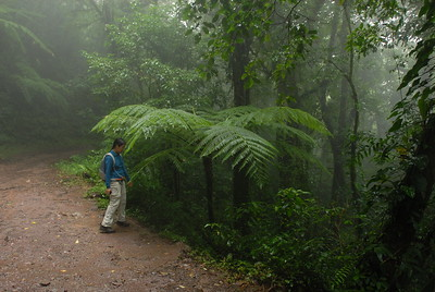 © Joseph Dougherty. All rights reserved.   Tree fern, Sphaeropteris brunei, in the cloud forest preserve at Monteverde.