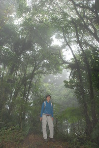 © Joseph Dougherty. All rights reserved.   Misty fog enshrouds the forest at Monteverde.