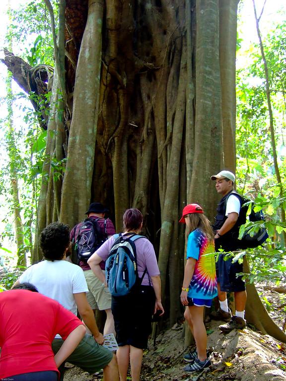 Costa Rica: Dec 31, 2010 - Carara National Park
