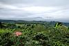 Coffee Plantations - Costa Rica (3)