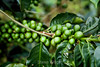 Coffee Beans - Costa Rica (1)