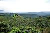 Coffee Plantations - Costa Rica (5)