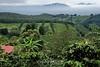 Coffee Plantations - Costa Rica (7)