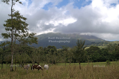 Horses grazing in front of the cloud covered Arenal volcano.  La Fortuna, Costa Rica