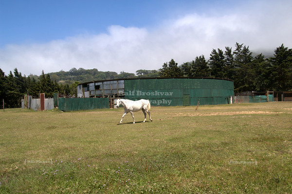 White horse walking in front of an old bullfight ring Monteverde, Costa Rica