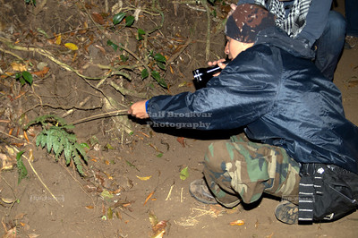 Teasing a Tarantula Monteverde, Costa Rica