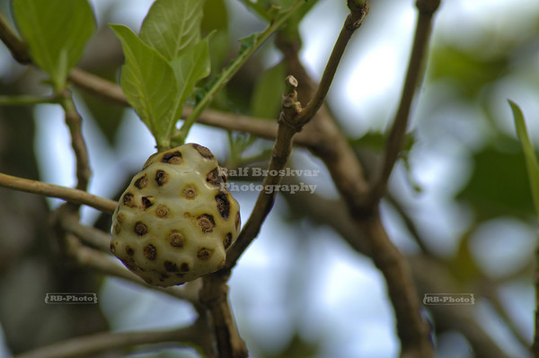 Tropical Fruit, Gandoca-Manzanillo Wildlife Refuge, Costa Rica