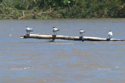 Birds found refuge on a tree in the water