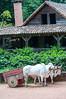 Casita de la Paz and Ox-driven cart