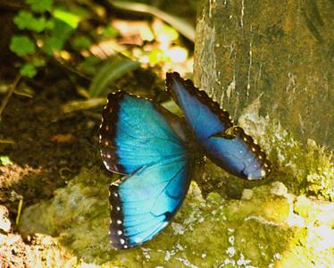 Butterfly Farm (La Guacima)