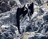 A dead Frigate Bird impaled on a stick on the cliff face.
