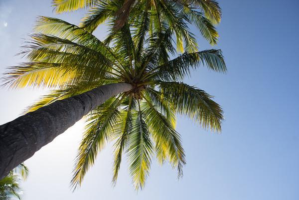 Palmtree!