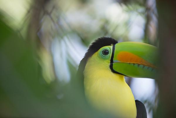 The toucan!