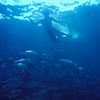 © Joseph Dougherty. All rights reserved. <br /> <br /> Snorkeling at Isla del Caño, southwestern Costa Rica.