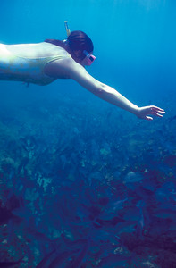 © Joseph Dougherty. All rights reserved.   Snorkeling at Isla del Caño, southwestern Costa Rica.
