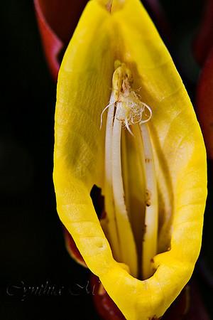 Flora at Hidalgo Hot Springs