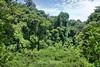 Forest - Manuel Antonio Park (1) D