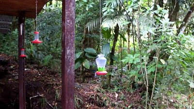 At the Monteverde Cloud Forest Park entrance, there was a hummingbird feeding area that made for some fine viewing.