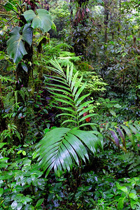 Plant variety within the Monteverde Cloud Forest