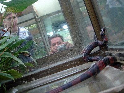 Richard's reflection of himself photographing a snake