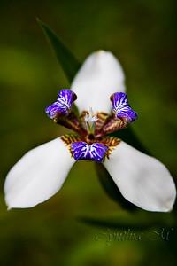 Flora at Monteverde Lodge