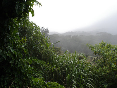 View from the Monteverde Butterfly Garden