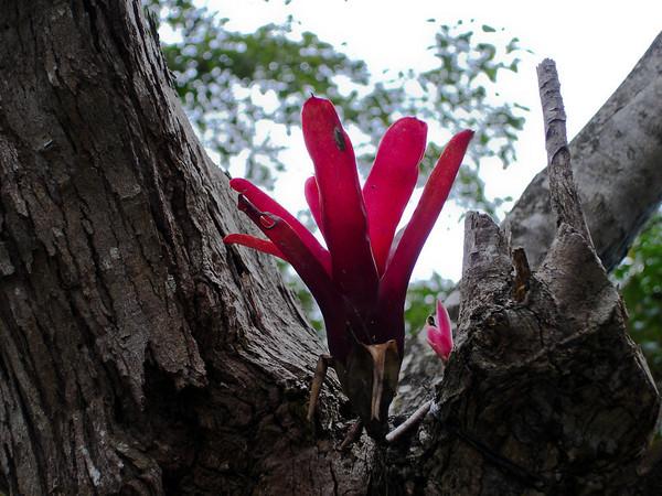 Monteverde flora