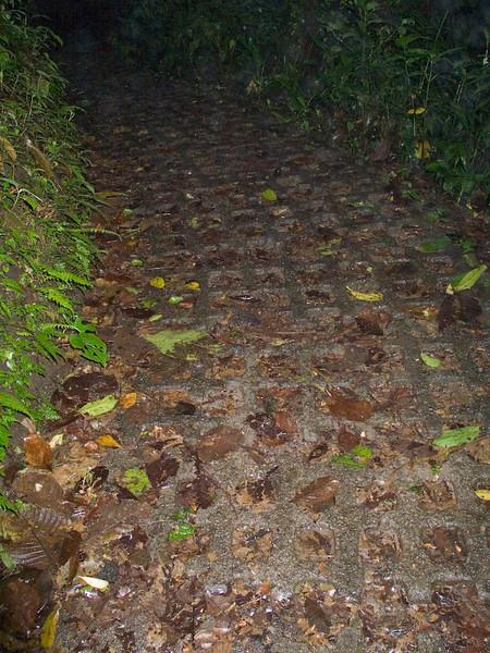 The path beneath our feet; the cloud florest floor