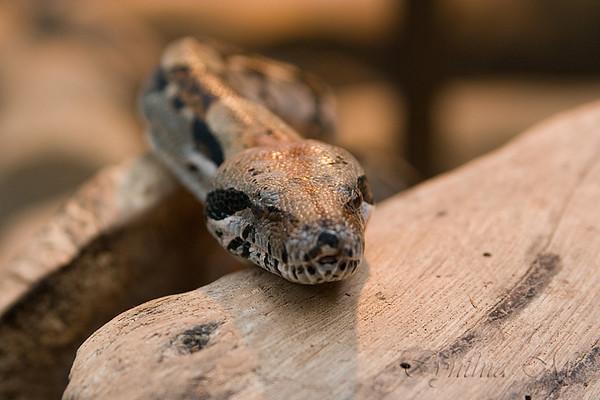 Monteverde Serpentario