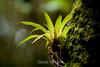 Bromeliads - Poas Volcano - Costa Rica (4) D
