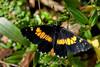 Butterfly - Poas Volcano - Costa Rica (1) D