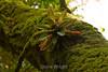 Bromeliads - Poas Volcano - Costa Rica (14) D