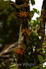 Bromeliads - Poas Volcano - Costa Rica (9) D copy