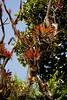 Bromeliads - Poas Volcano - Costa Rica (6) D
