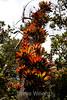 Bromeliads - Poas Volcano - Costa Rica (18) D