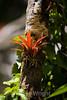 Bromeliads - Poas Volcano - Costa Rica (10) D copy